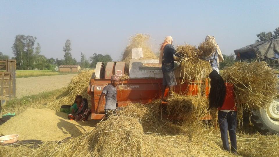 धानकाे मूल्य सरकारले तोकेकोभन्दा बढी पाएपछि किसान खुसी